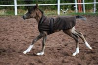Ella Electroica filly 2